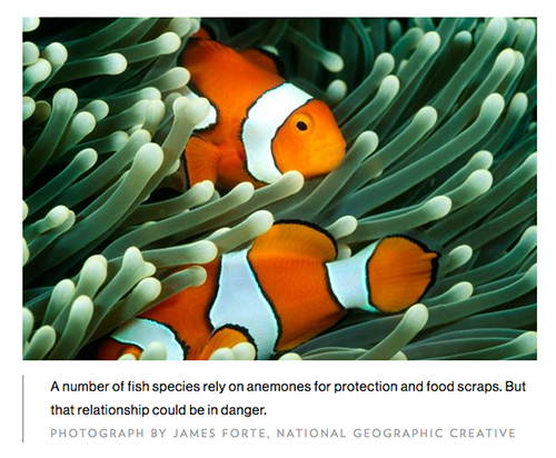 Warming Oceans May Make 'Nemo' Harder to Find