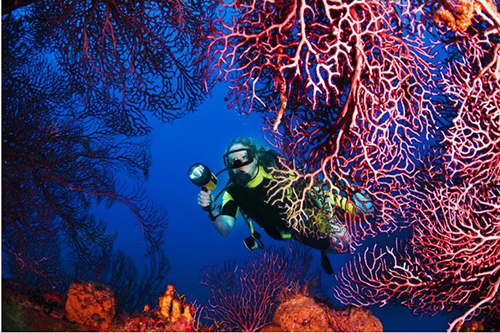 Bloomberg Pursuits - Six Epic Scuba Dives for Every Adventurer
