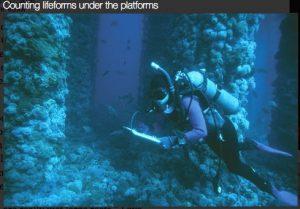 UCSB Diver counting life under platform Holly in Santa Barbara